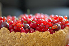Cheesecake with red currant and gooseberry. Sour cream cheesecake with red currant and gooseberry Stock Photos