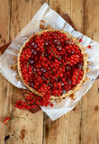 Cheesecake with red currant and gooseberry. Sour cream cheesecake with red currant and gooseberry Stock Image