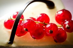 Cheesecake with redcurrant Royalty Free Stock Photography