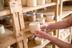 Cheeses aging at the cellar Royalty Free Stock Photos