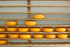 Cheeses riping Royalty Free Stock Photos
