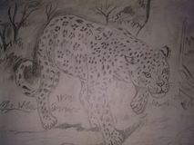 Cheeta libre illustration