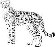 cheetah vektor abbildung