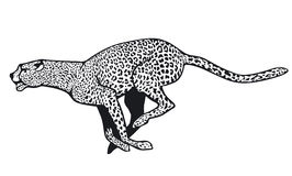 Cheetah vector illustration