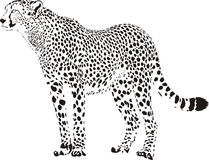 cheetah vektor illustrationer