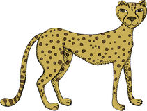 Cheetah. Vector illustration of standing cheetah Stock Photos