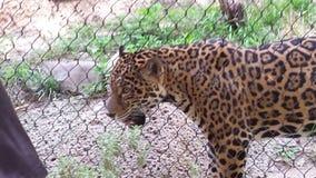 cheetah Stock Foto