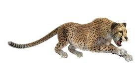 cheetah royalty illustrazione gratis