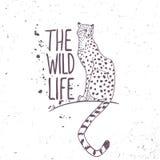 cheetah ilustração royalty free