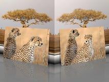 Cheetah Acinonyx jubatus portraits with african landscape stock illustration