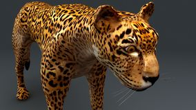 Cheetah. The cheetah, also known as the hunting leopard, is a big cat that occurs mainly in eastern and southern Africa and a few parts of Iran royalty free stock images