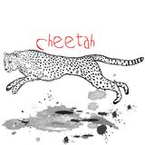Cheetah animal jump with ink spots Royalty Free Stock Photo