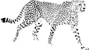 Cheetah royalty free illustration