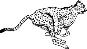 Cheetah during the chase, Africa. Black liner continuous line Illustration. Wildlife, running animal Royalty Free Stock Photo