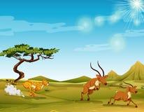 Cheetah chasing deers in the savanna. Illustration vector illustration