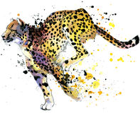 Cheetah. cheetah illustration watercolor. Cheetah. cheetah Tee shirt graphics. cheetah illustration with splash watercolor textured background. cheetah stock illustration