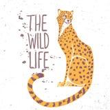 Cheetah color Royalty Free Stock Photo