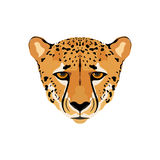 Cheetah colored head. Royalty Free Stock Photos
