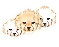 Cheetah cubs Stock Photo