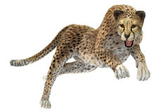 Cheetah. 3D digital render of a hunting cheetah isolated on white background Stock Photos