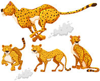 Cheetah in four different actions Royalty Free Stock Photos