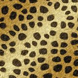 Cheetah fur Stock Image