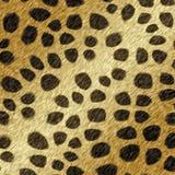 Cheetah fur. Background is printed cheetah fur Stock Image