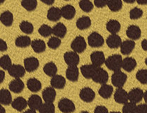 Cheetah fur texture Royalty Free Stock Photography