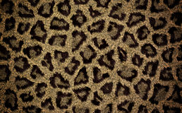Cheetah fur texture Royalty Free Stock Image