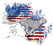 Cheetah and grunge american flag in ink spots Stock Images