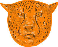 Cheetah Head Drawing Royalty Free Stock Photography