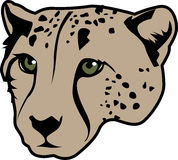 Cheetah head  Stock Photography