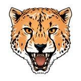 Cheetah head Royalty Free Stock Photography