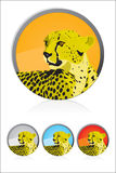 Cheetah icon. Vector Speed Cheetah illustration icon Royalty Free Stock Photography