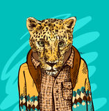 Cheetah in a jacket Royalty Free Stock Images