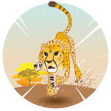 Cheetah King of Speed Royalty Free Stock Photo