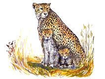Cheetah with kittens sitting camouflaged in the grass in the African savanna and looking forward vector illustration