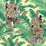 Cheetah and leopards palm leaves tropical watercolor in the jungle seamless background. Stock Image