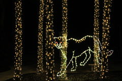 Cheetah made from lights Stock Image