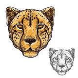 Cheetah muzzle African wild animal vector icon Royalty Free Stock Image