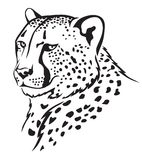 Cheetah muzzle. The contour image of the cheetah's muzzle Stock Images