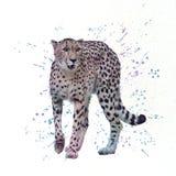 cheetah Pintura da aquarela de Digitas ilustração do vetor