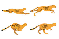 Cheetah Run Royalty Free Stock Photos