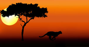 Cheetah running silhouette. Cheetah running in sunset silhouette Stock Photo