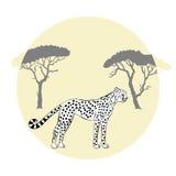 Cheetah between savannah trees . Royalty Free Stock Photos