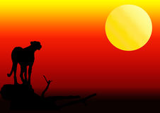 Cheetah silhouette in sunset. Cheetah standing on a fallen tree silhouette in sunset Royalty Free Stock Image