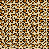 Cheetah skin Royalty Free Stock Photo
