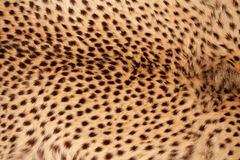 Cheetah skin Stock Photo