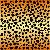 Cheetah spots. Animal print cheetah spots pattern Royalty Free Stock Photo