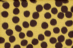 Cheetah spots background. Black color round spots at cheetah skin as a background Royalty Free Stock Photos